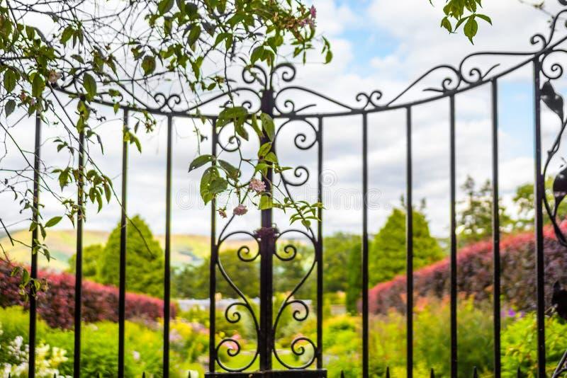 Härlig gammal trädgårds- port med klättringmurgrönan royaltyfri fotografi