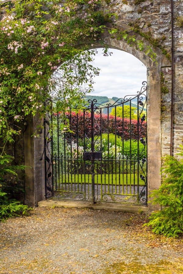 Härlig gammal trädgårds- port som täckas med den gröna murgrönan royaltyfri foto
