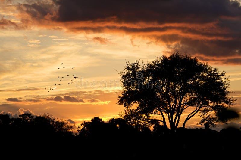 härlig glödsolnedgång fotografering för bildbyråer