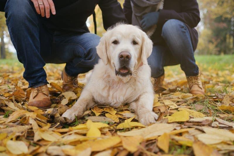 Härlig golden retrieverhund som ligger på jordning i den utomhus- höstskogen arkivfoto