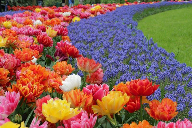 Härlig gräs krökt trädgård med många kulöra blommor arkivbild