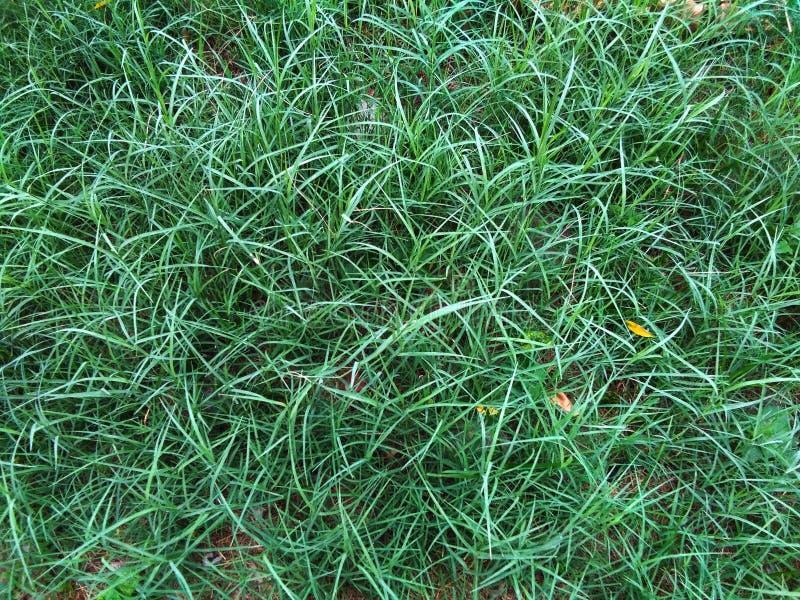 Härlig gräsplan och glänsande gräs royaltyfria bilder