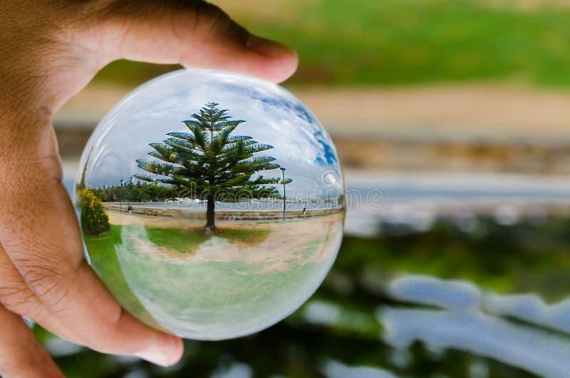 Härlig gräsplan sörjer trädfotografi i klar crystal glass boll arkivbilder