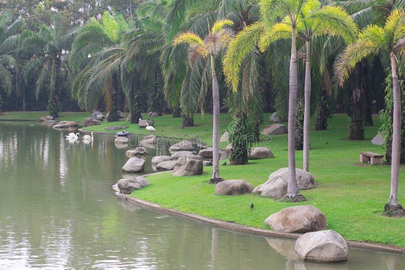 Härlig gräsplanträdgård och flod royaltyfri foto