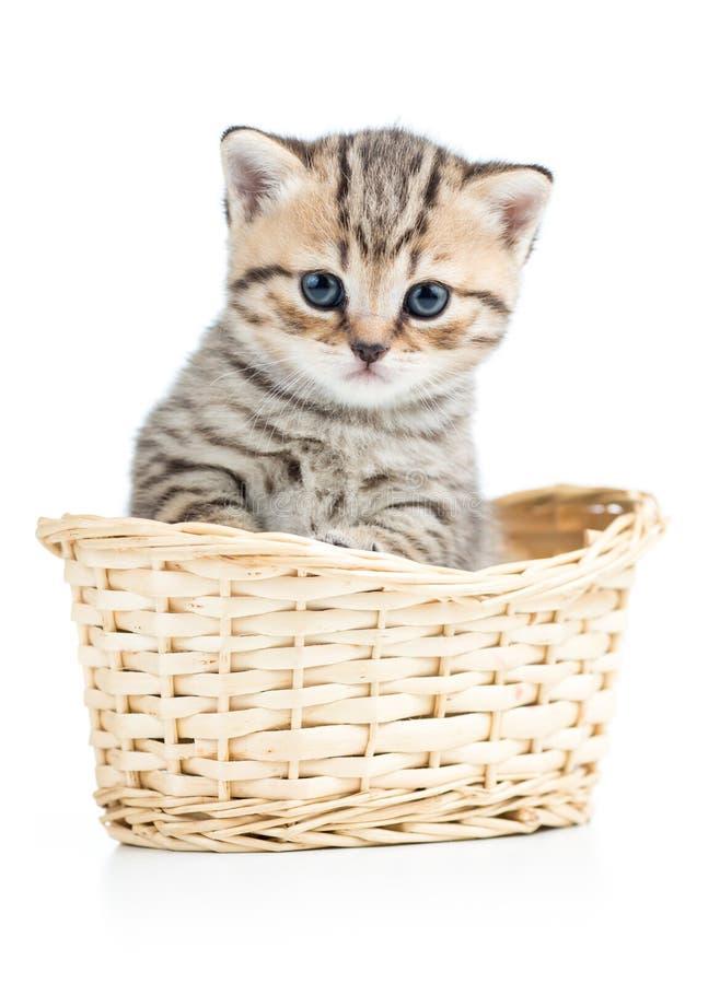 Härlig grå kattunge i korgen som isoleras på vit arkivfoto