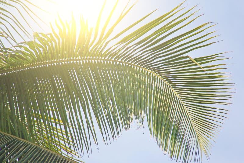 Härlig grön palmblad och sol Grön bakgrund av palmträdet royaltyfria bilder