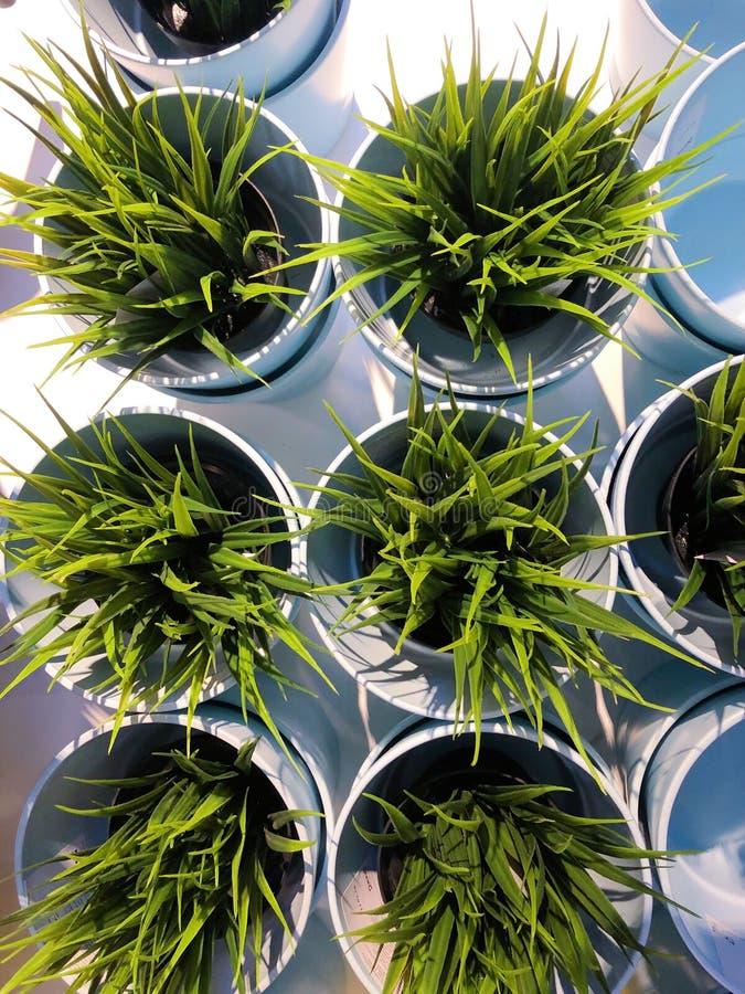 Härlig grön växt i en krukasikt royaltyfri fotografi