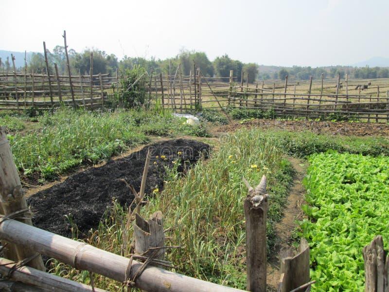 Härlig grönsakträdgård i Laos arkivbilder