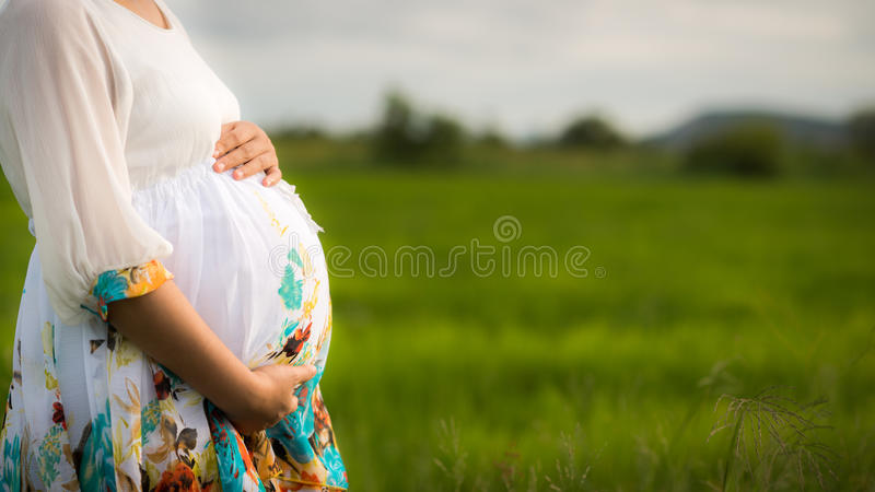 Härlig gravid asiatisk kvinna i Ricefält arkivbilder