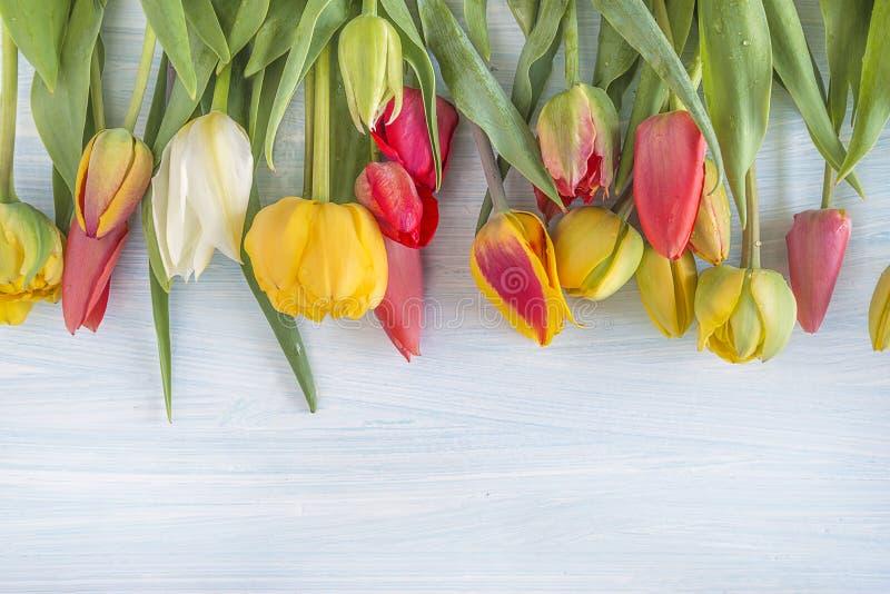 Härlig grupp av nya mångfärgade tulpan royaltyfri bild