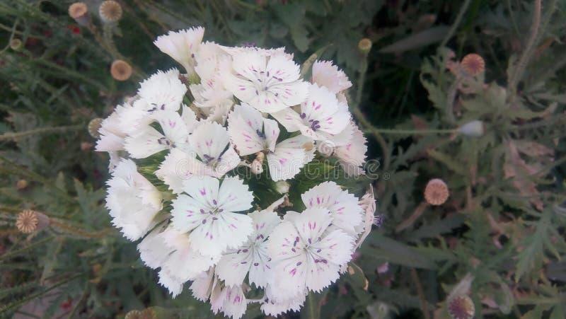 Härlig grupp för vita blommor arkivfoto