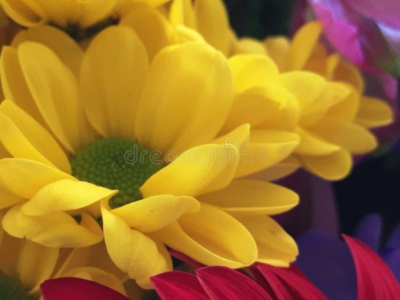 Härlig gul blomma i en bukett arkivfoto