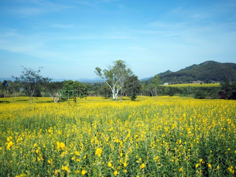 Härlig gul blomma i fält fotografering för bildbyråer