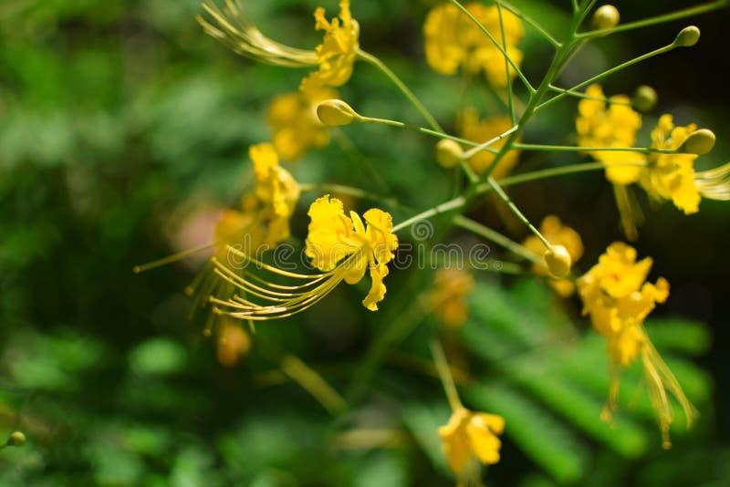 Härlig gul blomma och solsken royaltyfria foton