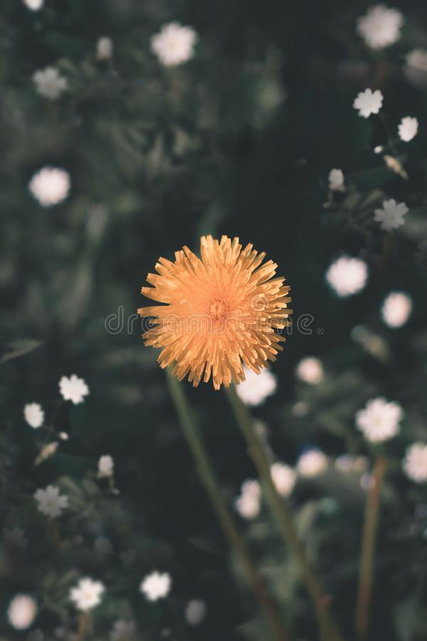 Härlig gul blomma, Ukraina arkivbilder