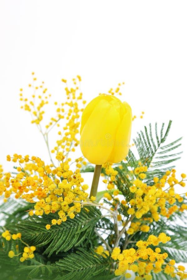 Härlig gul tulpan och mimosa för mors dag arkivfoto