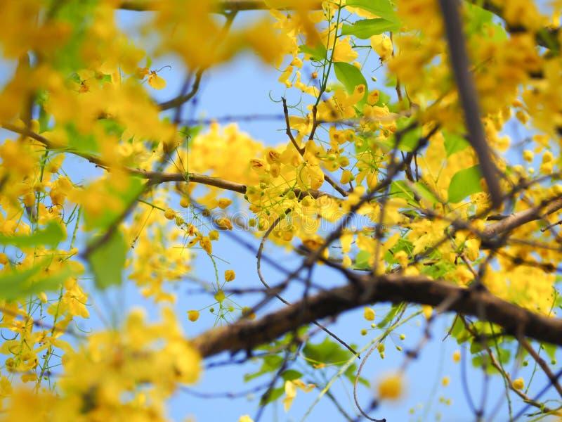 Härlig guling av guld- duschar arkivbilder
