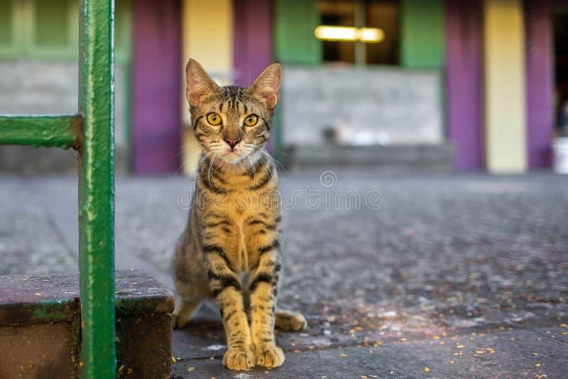 Härlig gullig katt på den lösa hemlöns för gata royaltyfria foton