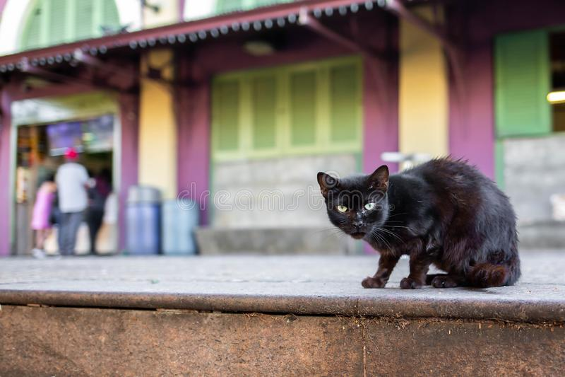 Härlig gullig katt på den lösa hemlöns för gata arkivbilder