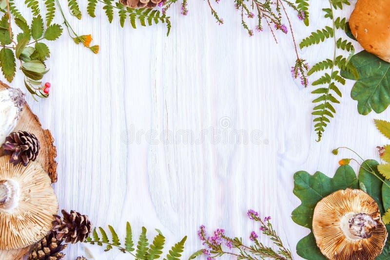 Härlig hörnram av naturliga material, champinjon, kottar, örter, bär Vit träbakgrund för höst royaltyfri fotografi