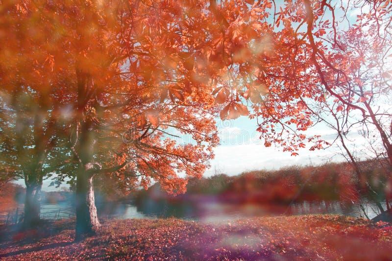 Härlig höst med kastanjebruna träd på floden royaltyfri foto