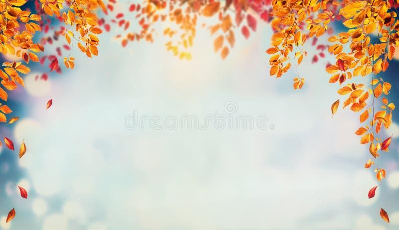 Härlig höstlövverkbakgrund med fruncher och fallande trädsidor på himmel royaltyfri foto