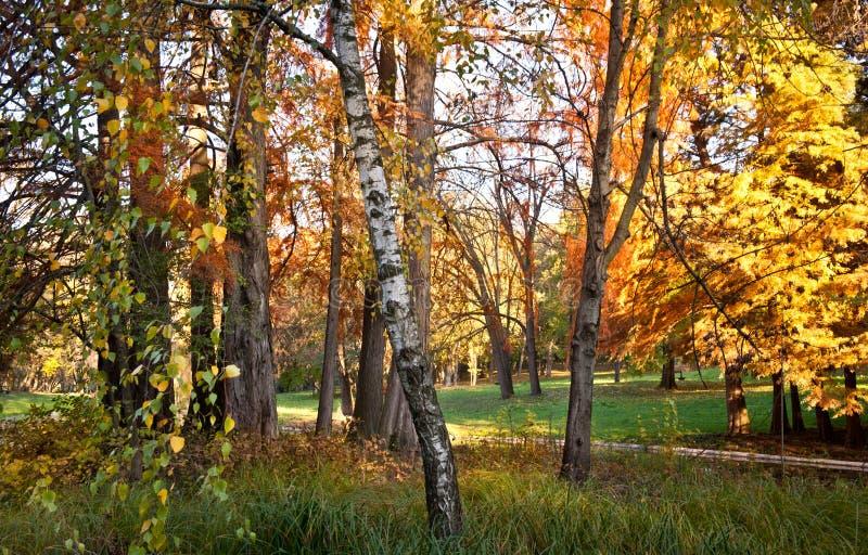 Härlig höstlig äng i skog på dagsljus Ljus kulör nedgångdag i träna liggande för höstslutskog arkivbilder