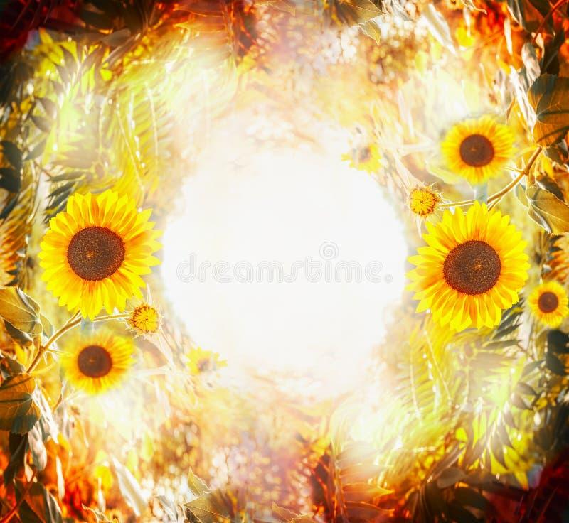 Härlig höstnaturbakgrund med solrosor, sidor och lövverk i trädgård eller parkerar Utomhus- naturbakgrund för nedgång fotografering för bildbyråer