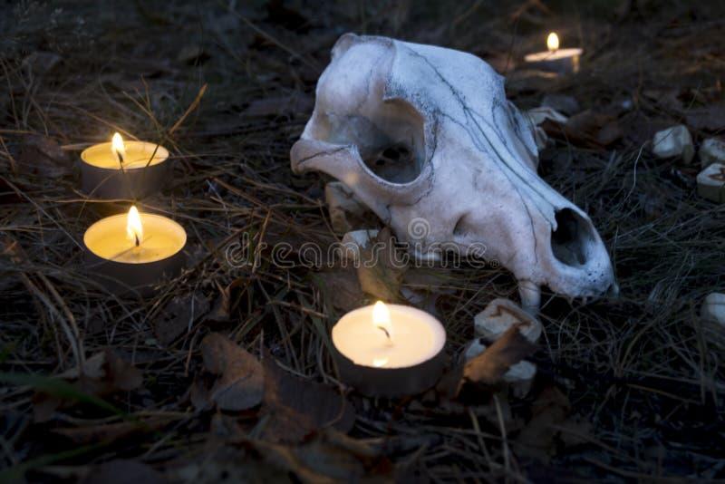 Härlig halloween sammansättning med runor, skallen, taroken och stearinljus på gräset i mörk höstskogritual royaltyfria foton