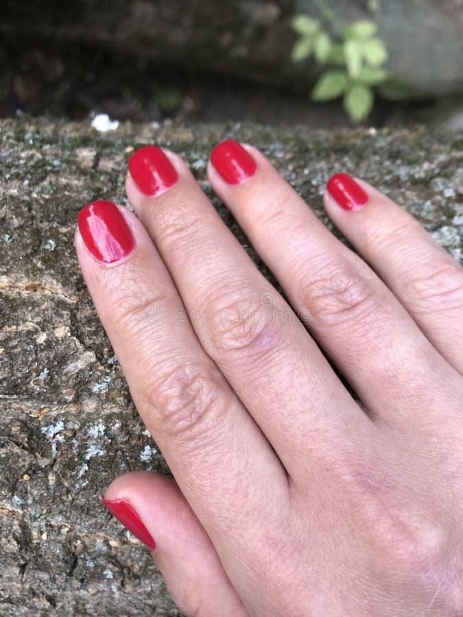 Härlig hand av en ung kvinna med en röd manikyr R?d manicure Hand på bakgrunden av gröna sidor royaltyfri foto