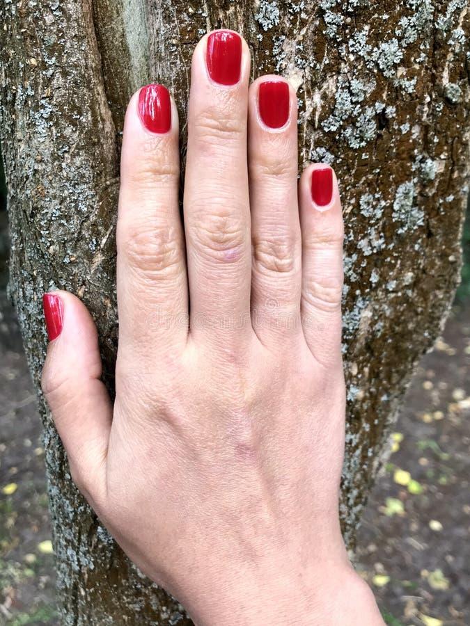 Härlig hand av en ung kvinna med en röd manikyr R?d manicure Hand på bakgrunden av gröna sidor arkivbilder