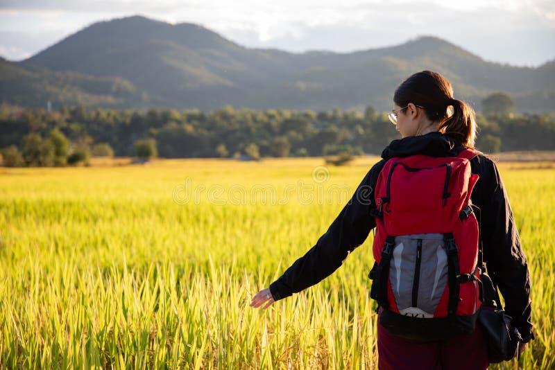 Härlig handelsresandekvinna med ryggsäcken på risfält i Thailand arkivfoton