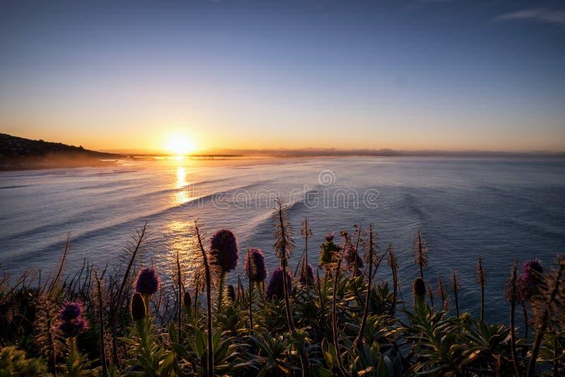Härlig havsikt av kust- område av Nya Zeeland royaltyfri bild