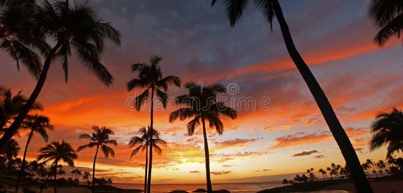 härlig hawaiansk koolinasemesterortsolnedgång arkivbild