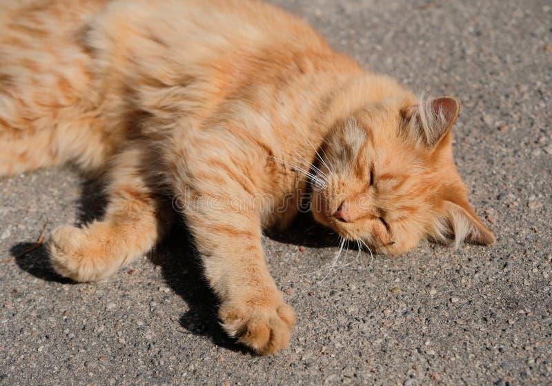 Härlig hemlös katt royaltyfri fotografi