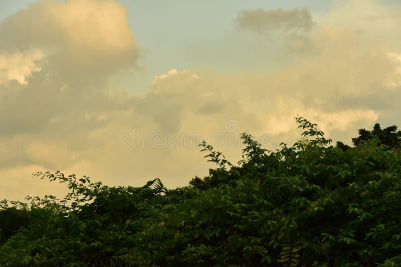 Härlig himmel, härliga guld- moln i solnedgången arkivfoto