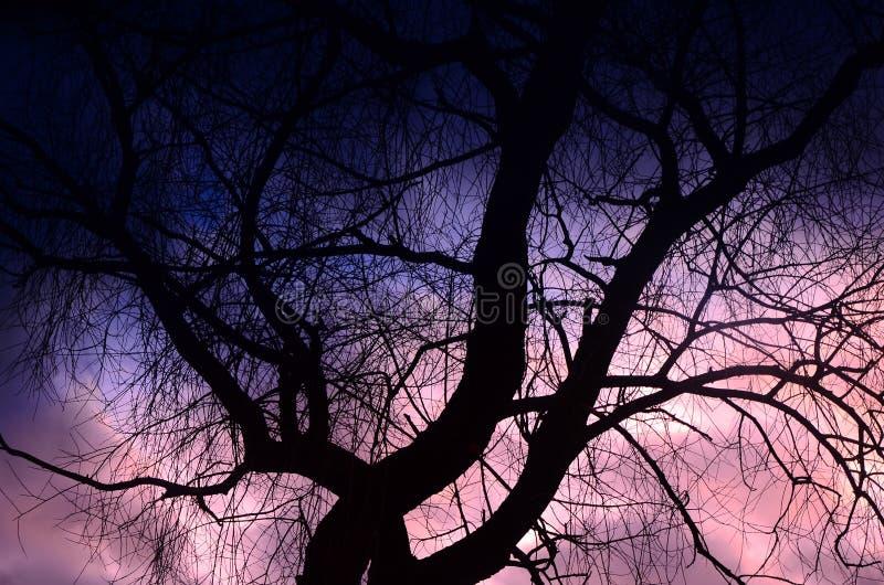 Härlig himmel och träd arkivbild