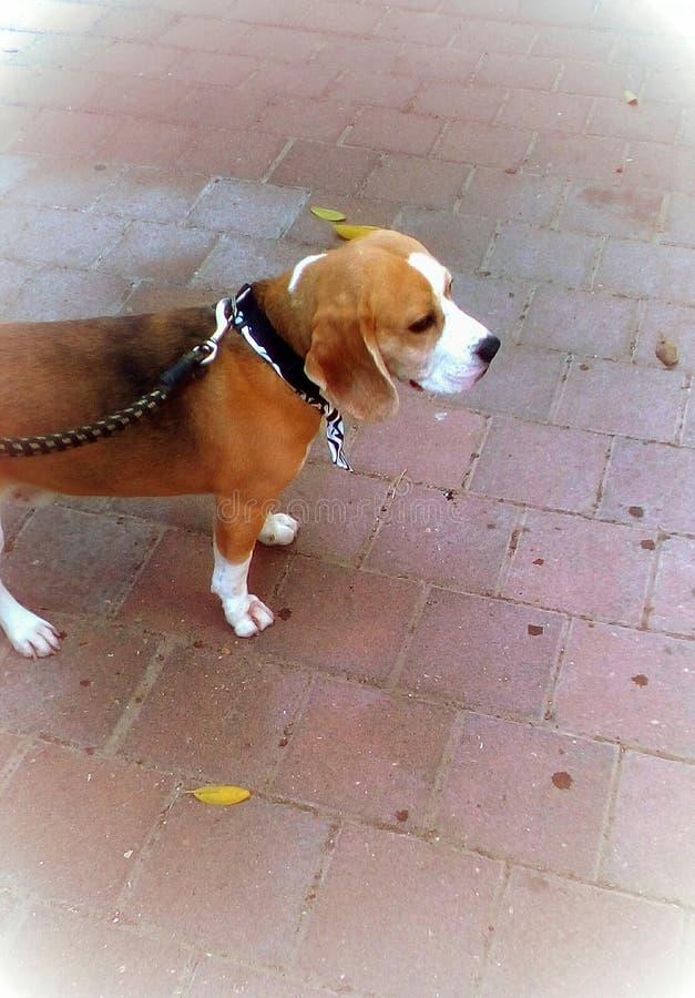 härlig hund royaltyfri bild