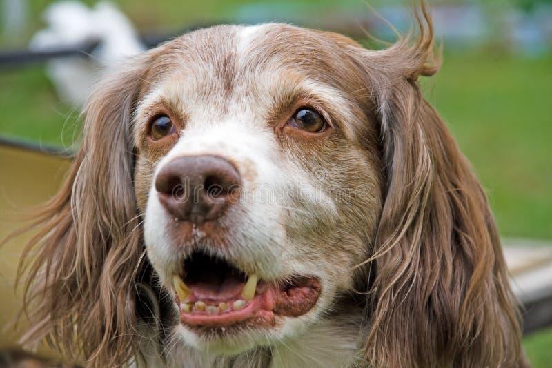 härlig hund royaltyfria bilder