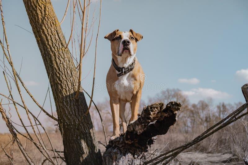 Härlig hund i fältet som står på ett torrt träd, hjälteskott arkivbilder