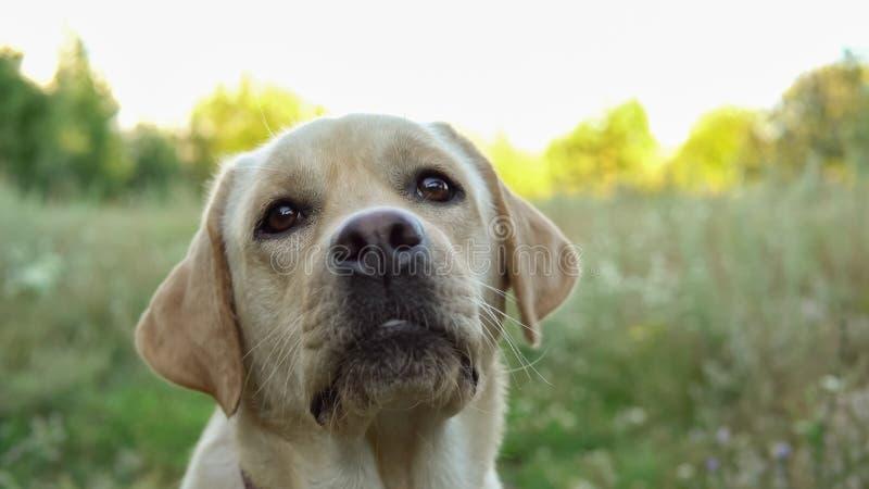 Härlig hund som vilar på naturen arkivfoto