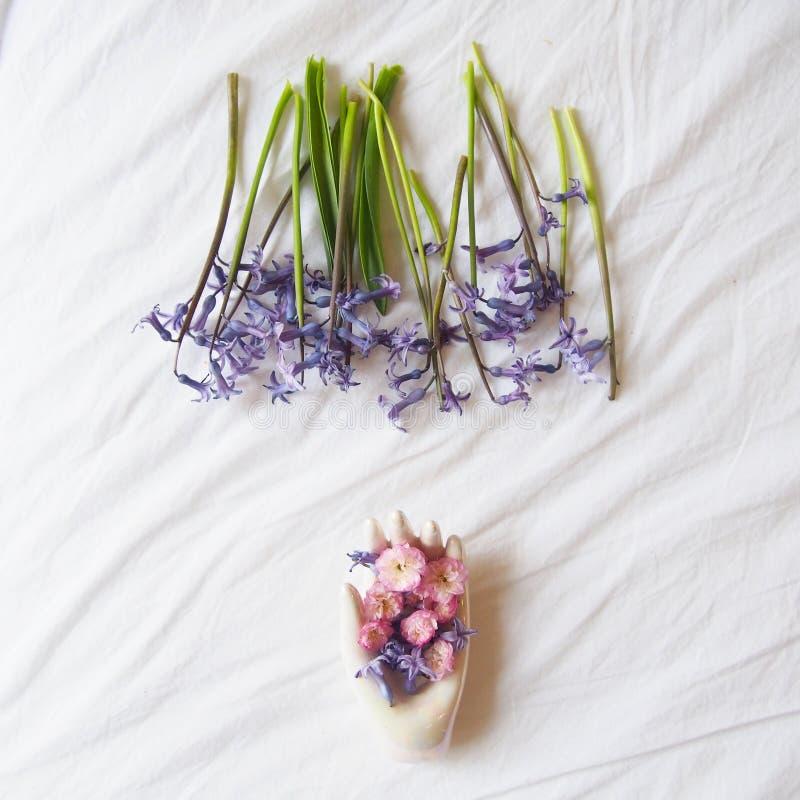 Härlig hyacint med en vit hand royaltyfri fotografi