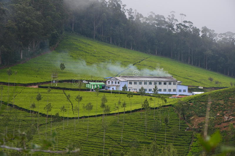 Härlig indisk tefabrik arkivbilder