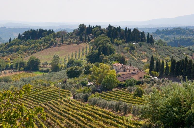 härlig italy vingård royaltyfri foto