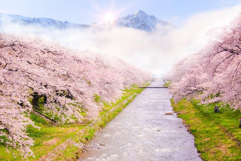 Härlig körsbärsröd blomning eller sakura i vårtid med bergsikt och soluppgångbakgrund arkivfoton