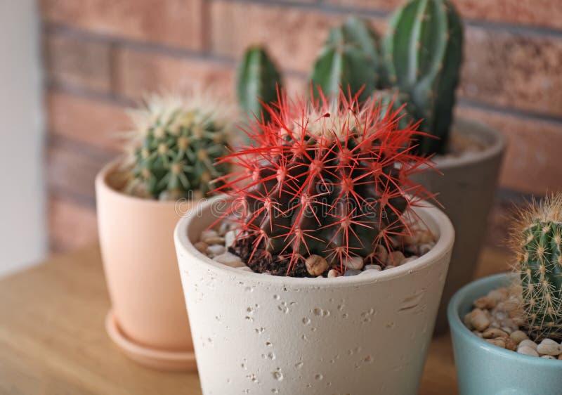Härlig kaktus i blomkruka arkivfoton