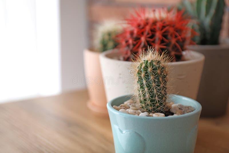 Härlig kaktus i blomkruka royaltyfria foton