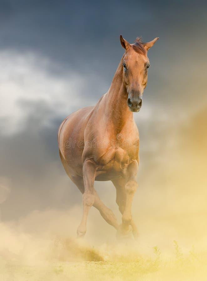 härlig kastanjebrun häst arkivbild