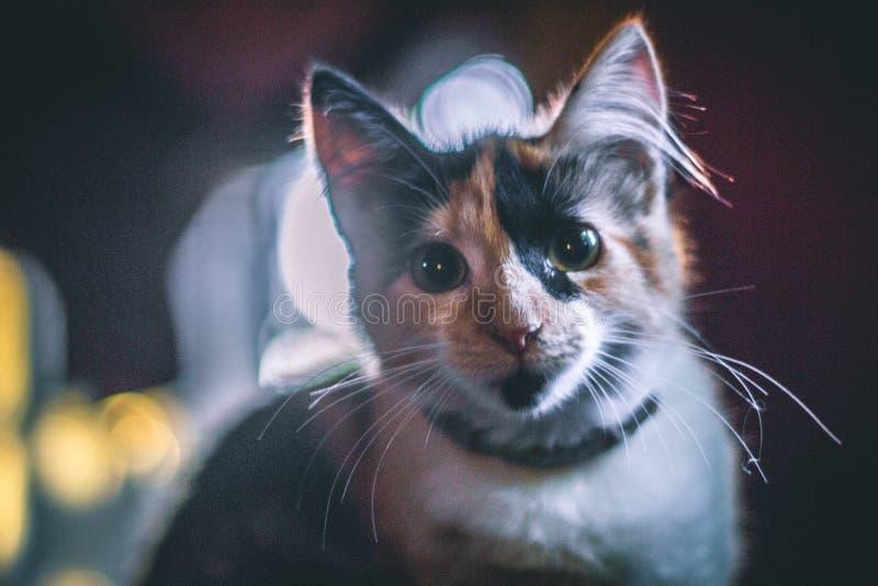 Härlig katt i morgonen royaltyfri foto