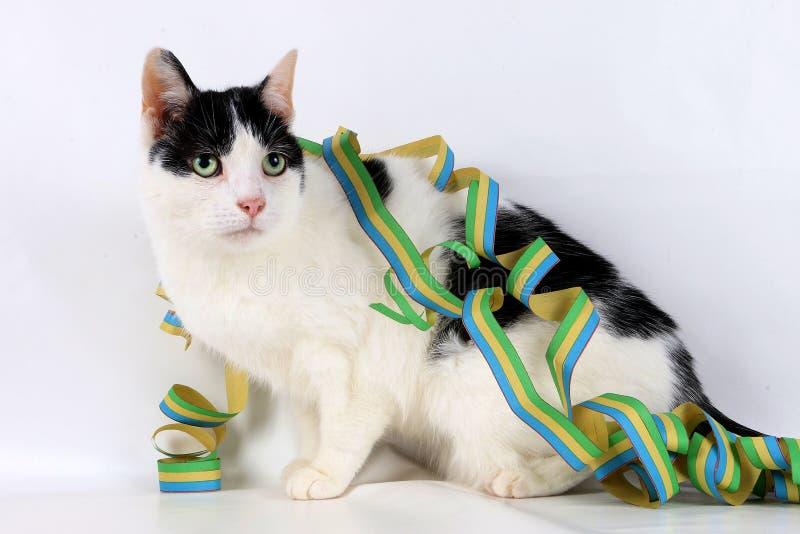 Härlig katt med den färgrika pappers- banderollen royaltyfria foton
